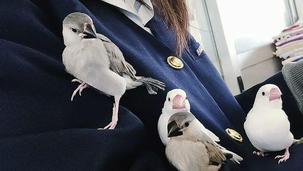 佐屋高校文鳥プロジェクト