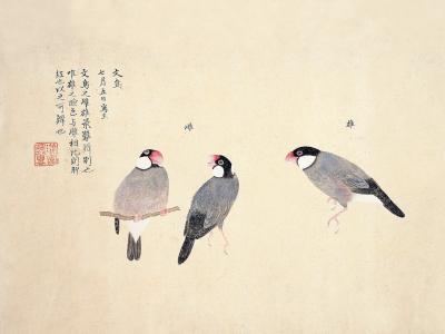 石顛道人:百鳥図・文鳥