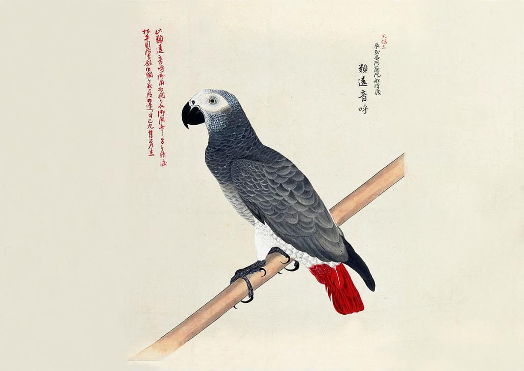 外国珍禽異鳥図
