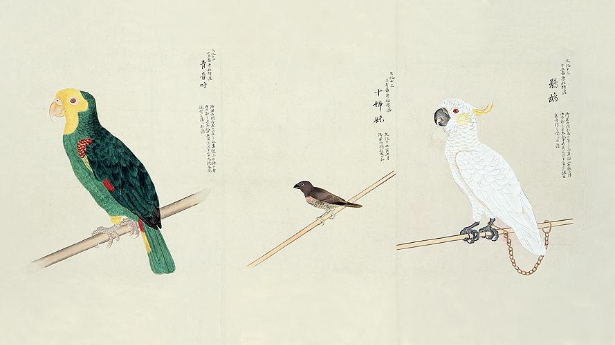 細川博昭先生 講演会『飼い鳥の歴史 ~日本人と鳥の2000年史~』